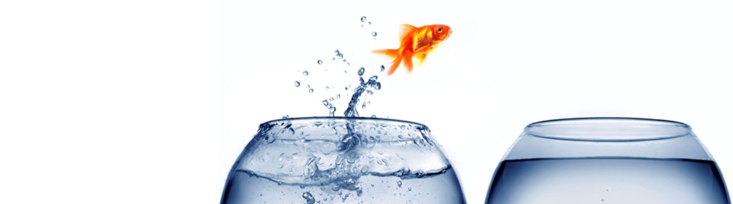 gold fish jumping from one fishbowl into another fishbowl
